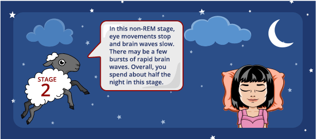 Stage 2 Sleep: A non-REM sleep stage that you spend about half the night in.